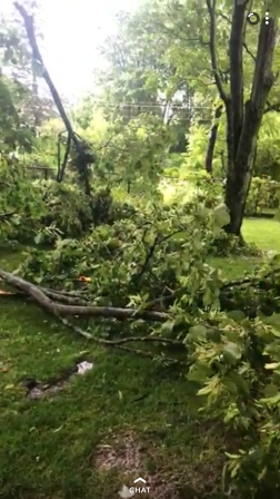 sister trees down